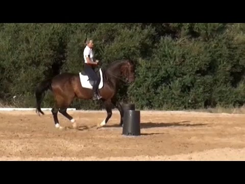 canter exercise with barrels to strengthen the hindlegs