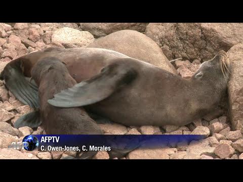 Uruguay, santuario de lobos marinos