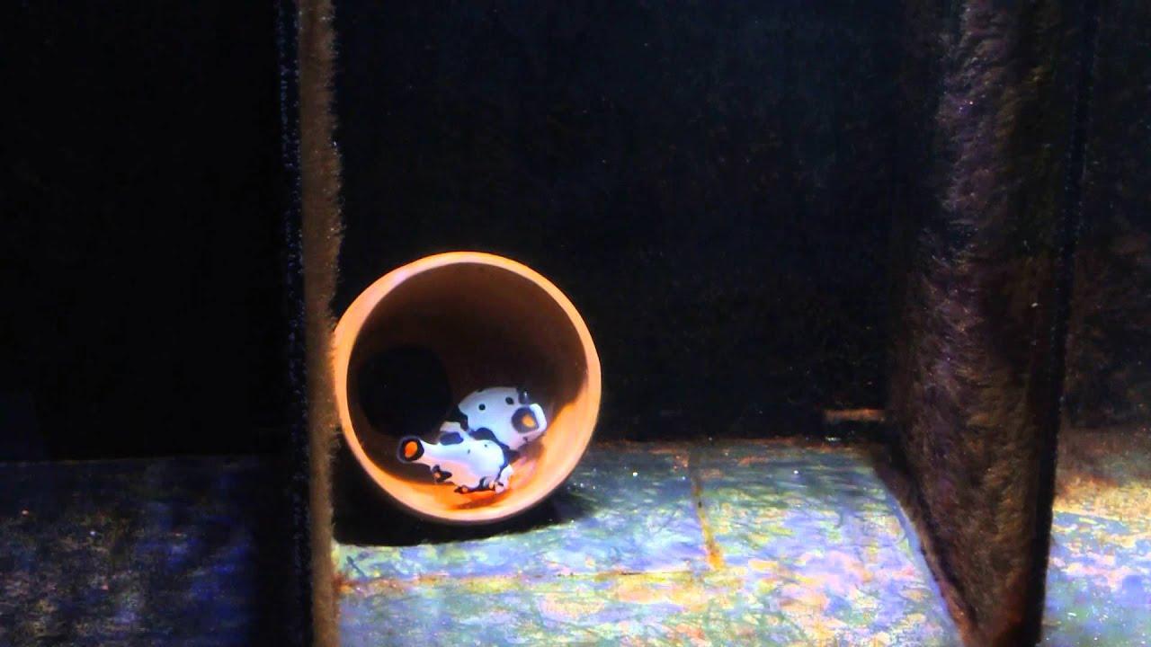 Picasso Clownfish Wallpaper Picasso Picasso Clownfish