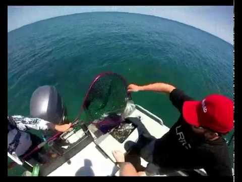 Squid fishing around the keppel islands