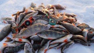 Крупный окунь зимой на мормышку. Сумасшедший клев! Рыбалка 19.11.2016