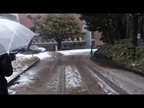 東京散歩 雪景色の東京藝術大学音楽学部構内 2015.1.30 Tokyo Japan Snow