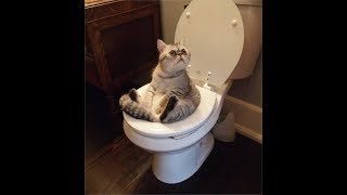 Cat training: Amazing! Cats using toilet compilation 2017