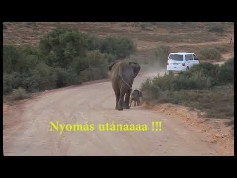 Egy kis elefánt nagy kalandja