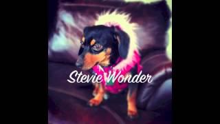 Watch Stevie Wonder Go Home video