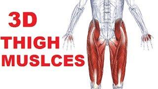 stretch hip flexors earlier than jumping