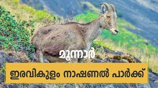 Rajamalai Eravikulam National Park in Munnar - Top Tourist Destination in Munnar