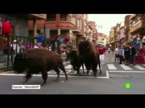 Denuncian un encierro celebrado con bisontes americanos en Logroño
