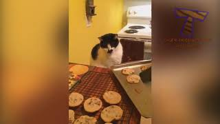 HILARIOUS ANIMALS 2019   You'll PEE YOUR PANTS from LAUGHING TOO HARD!
