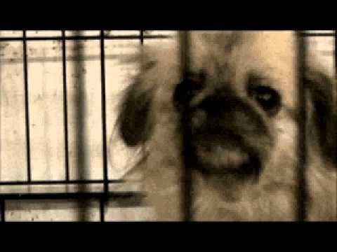 El Encantador de Perros - Criados con Crueldad (fragmentos) - Temporada 5