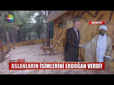 Erdoğan'ın Aslanları yuvalarına yerleşti!