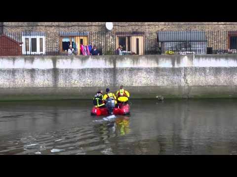 何故そうなった?川に取り残された猫を消防隊が救います。