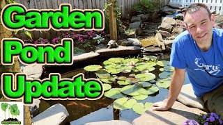 A backyard koi fish/wildlife pond update, Treat green pond water.