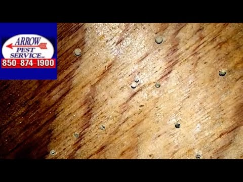 Powder Post Beetles in Crawl Space, Panama City, FL- Arrow Pest Service