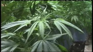 Local lawmaker wants to tax medical marijuana