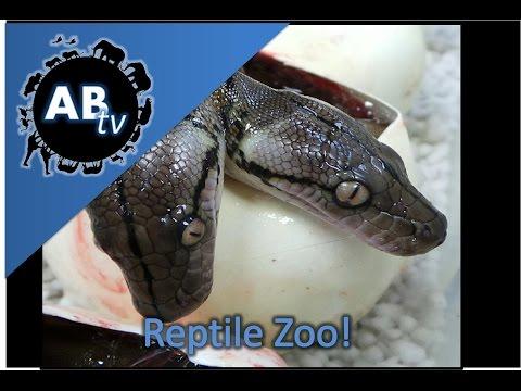 Reptile Zoo! SnakeBytesTV : AnimalBytesTV