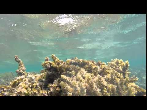 National Geographic Student Expeditions Belize 2014