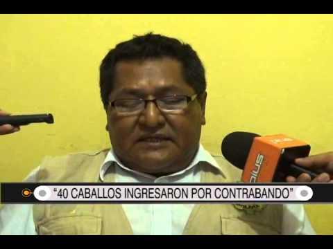 """01/09/2014- 13:00 """"40 CABALLOS INGRESARON POR CONTRABANDO"""""""