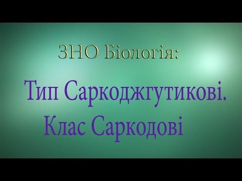 ЗНО Біологія  Тип Саркоджгутикові  Клас Саркодові