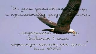 Дай мне крылья как у орла