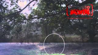 Espectro/Fantasma en el bosque. - TerrorMental.