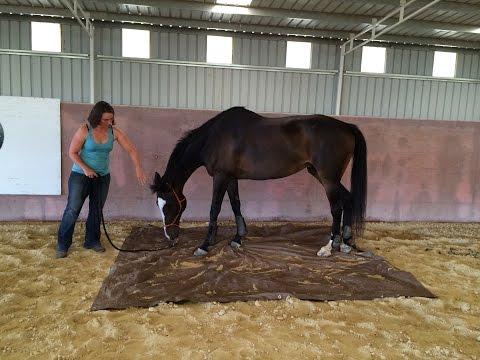 Teaching a horse to cross a tarp
