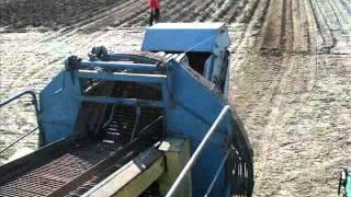 Przygotowanie pola pod zasiew pszenicy