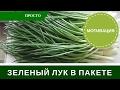 Лук На Перо в Пакете: Зеленый Лук в Домашних Условиях