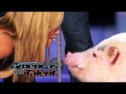 John Vincent and Mudslinger: Heidi Klum Kisses a Pig - America's Got Talent 2014