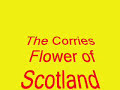 view Flower of scotland