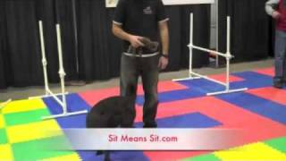 Fort Collins Therapy Dog Training