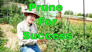 How to Prune Tomatoes for the Best Harvest