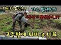 고추농사 고추비료 가축퇴비 거름주기 고추재배방법 청도달콤한농장 mp3 indir
