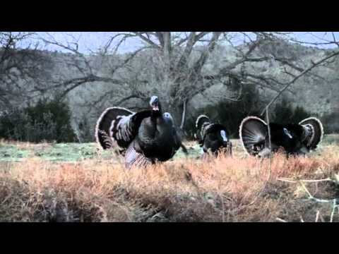 Spring Turkey Hunt April 2010