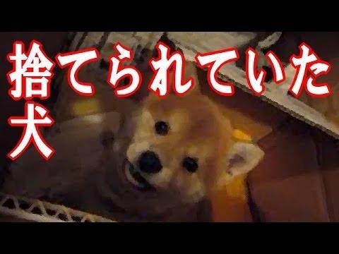 捨てられていた犬の泣ける動画です。