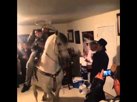 Spice Up Your Party With A Horse!