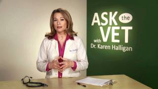 Ask the Vet - Feline Teeth Health