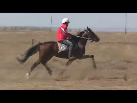 Заезд рысь под седлом.Райков конно-спортивный праздник, посвященный дню победы