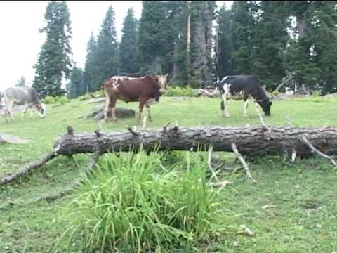 aaj tv tourism news pakge from asif raza mir muzaffarabad azad kashmir pakistan