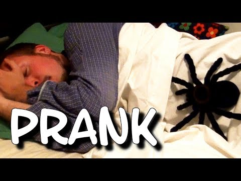 Giant Spider Scare Prank - Nasty Wake Up Call ! (with funny slow-mo replay) Scary