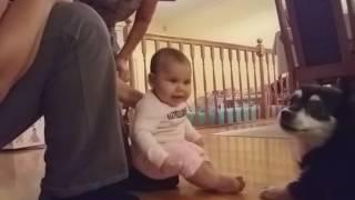 Baby laughing at sneezing dog