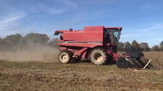 1989 Case International 1680 Threshing Soybeans Cummins Sound #Harvest19 #Farming