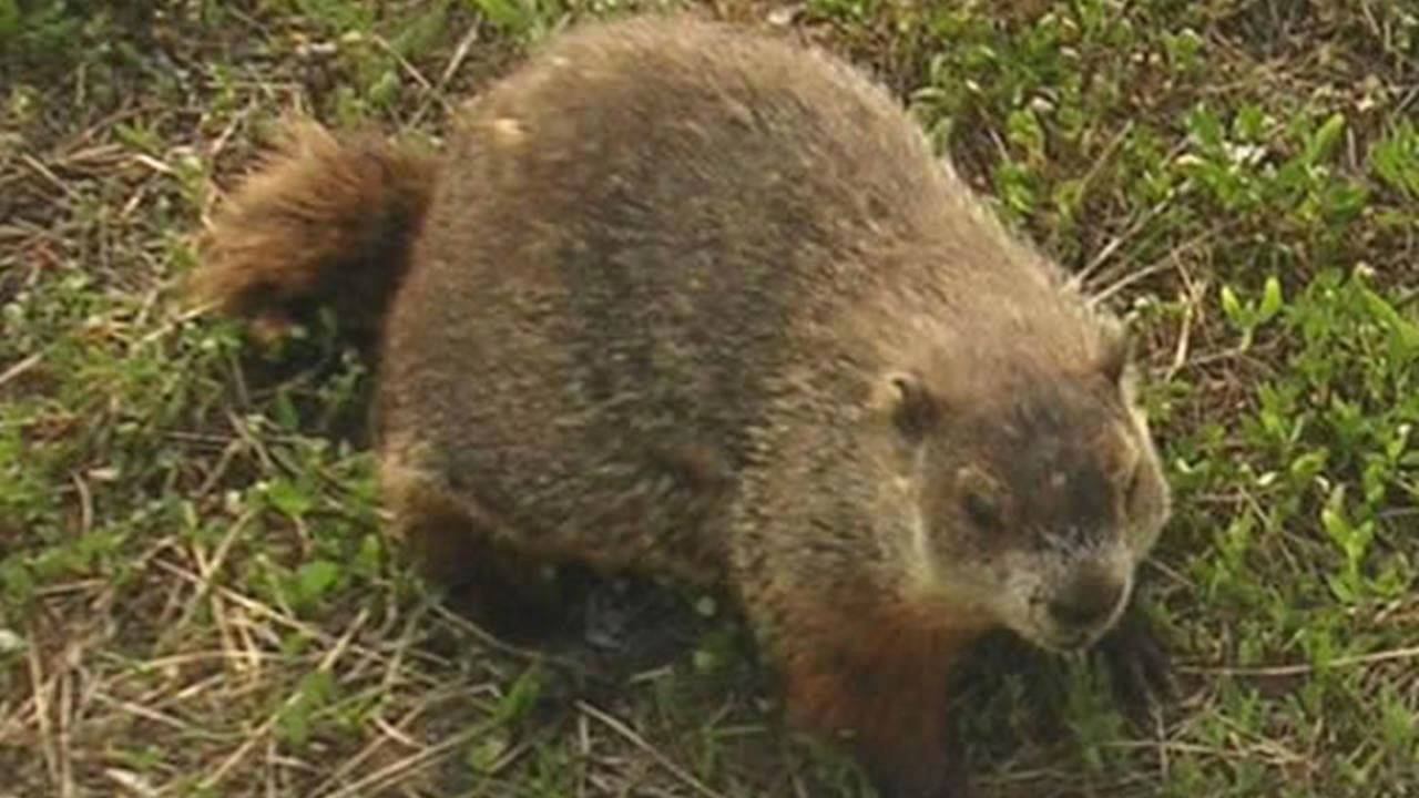 essay on the groundhog by richard eberhart In richard eberhart's poem the groundhog, the author uses his expertise in  language to contrast life  essay about richard iii - did richard kill the children.
