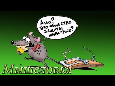 Как сделать мышеловку ( Своими руками ) +Мыши живые mousetrap