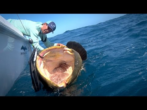 Monster Fishing on Shallow Florida Wrecks