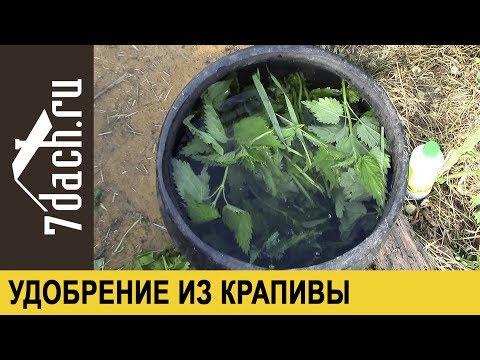 Удобрение из крапивы: травяной настой с Байкалом М - 7 дач