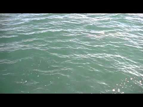 Hammerhead Shark Fishing 3-26-2012 Sarasota, FL