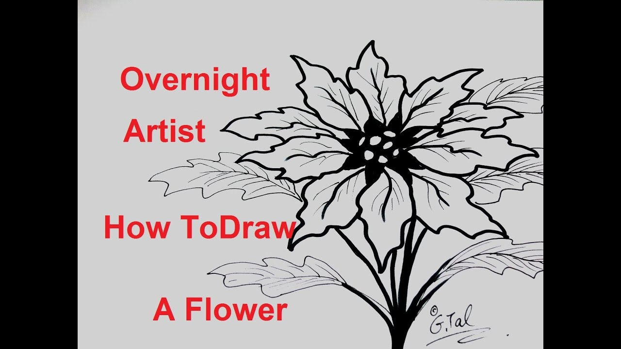 Flower Drawing Drawing Draw Christmas Flowers