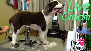 How to groom a dog Live Professional Groomer