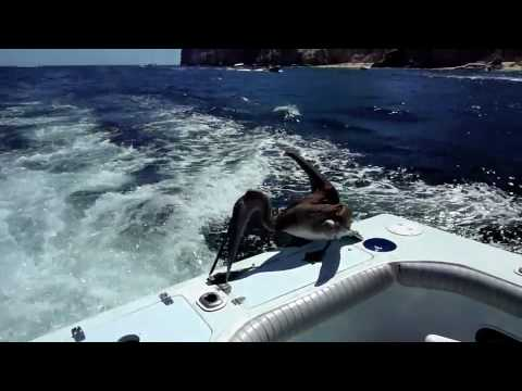 Deep Sea Fishing Highlights, Cabo San Lucas